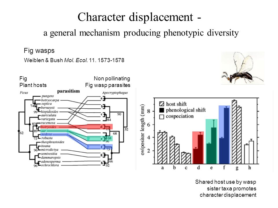 Character displacement - a general mechanism producing phenotypic diversity