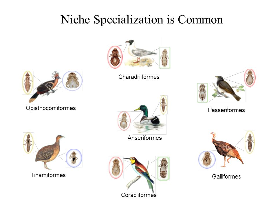 Niche Specialization is Common