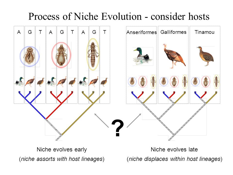 Process of Niche Evolution - consider hosts Niche evolves early