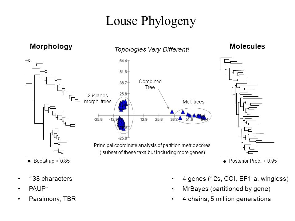 Louse Phylogeny Morphology Molecules Topologies Very Different!