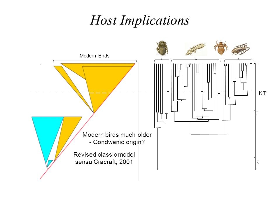 Host Implications KT Modern birds much older - Gondwanic origin