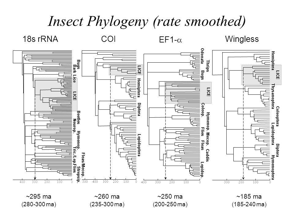 Insect Phylogeny (rate smoothed)