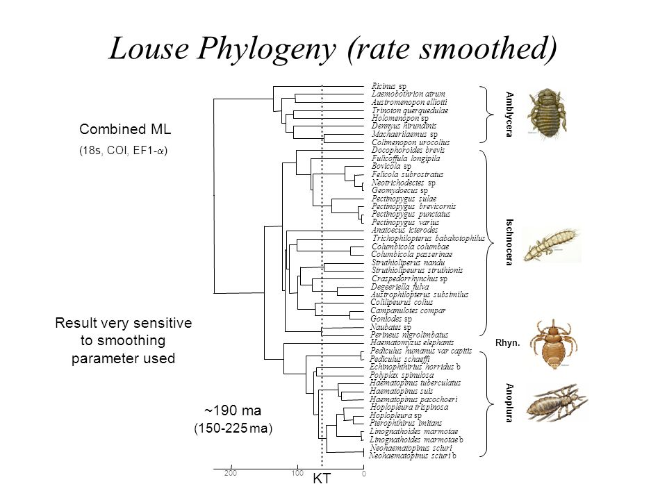 Louse Phylogeny (rate smoothed)