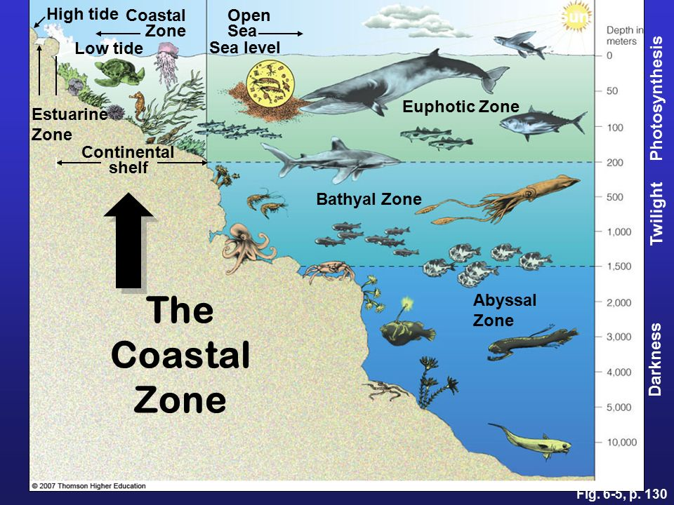 Sea zones image collections diagram writing sample and guide for 10 facts about sea floor spreading