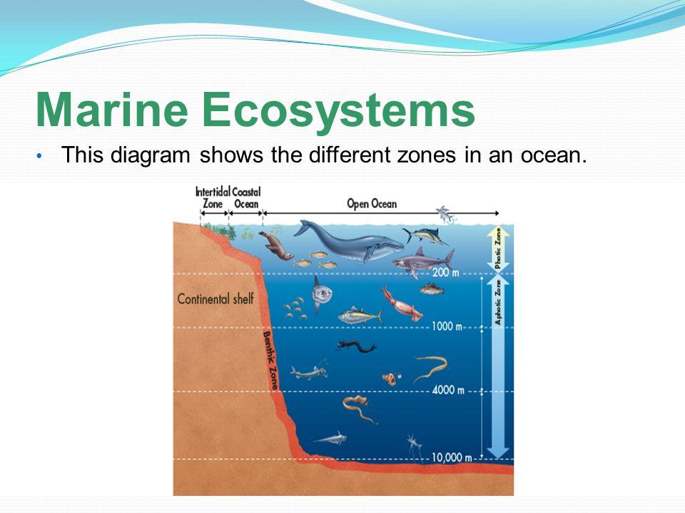 marine wiring diagram symbols marine ecosystem diagram topic 2 aquatic ecosystems - ppt video online download