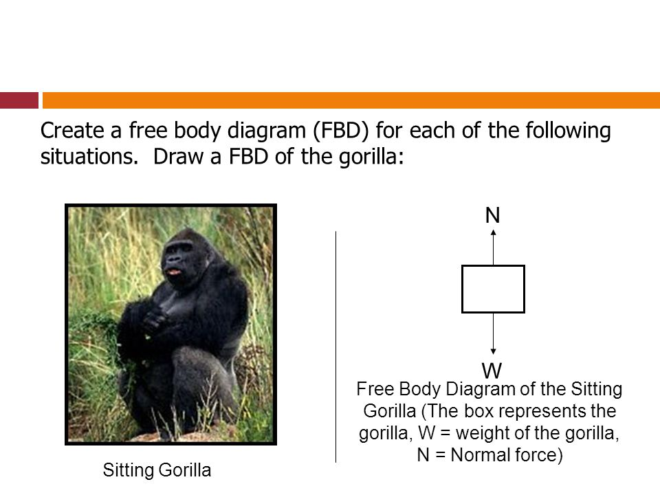 Create a free body diagram (FBD) for each of the following situations
