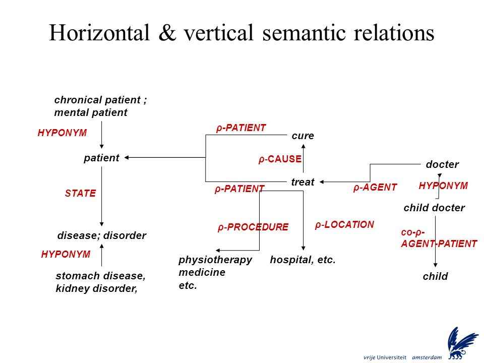 Horizontal & vertical semantic relations