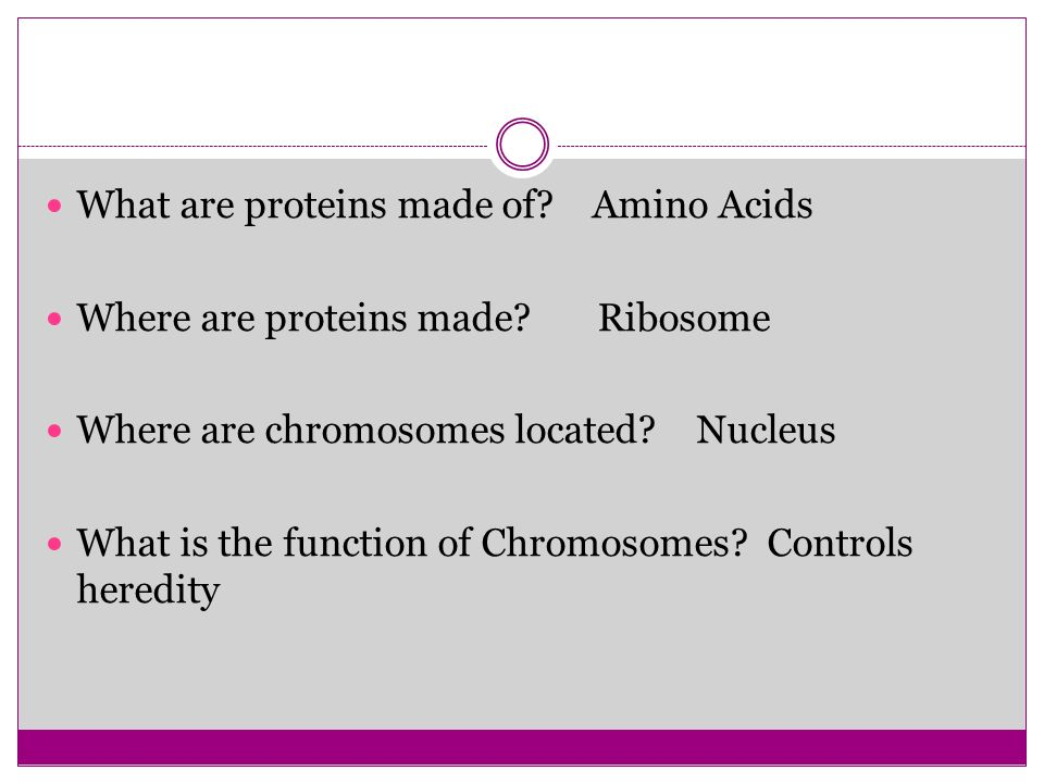 What are proteins made of Amino Acids