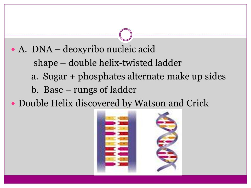 A. DNA – deoxyribo nucleic acid
