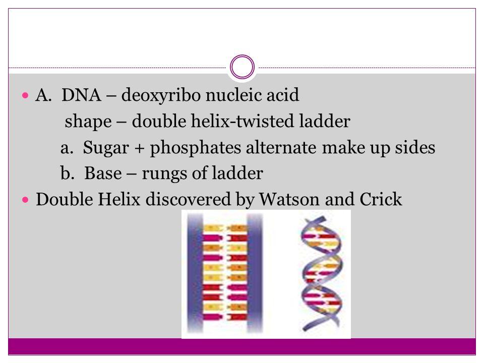 A. DNA – deoxyribo nucleic acid