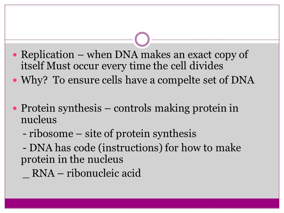 Replication – when DNA makes an exact copy of itself Must occur every time the cell divides