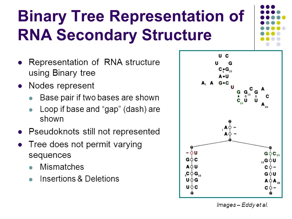 Binary Tree Representation of RNA Secondary Structure