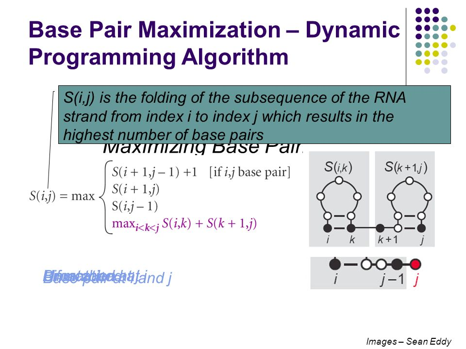 Base Pair Maximization – Dynamic Programming Algorithm