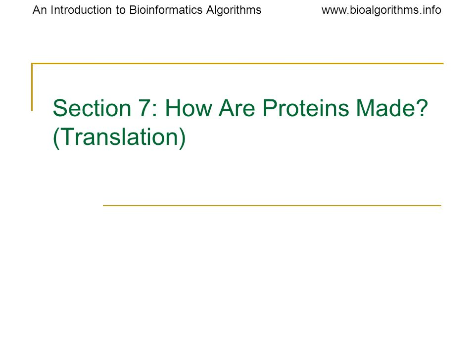Section 7: How Are Proteins Made (Translation)