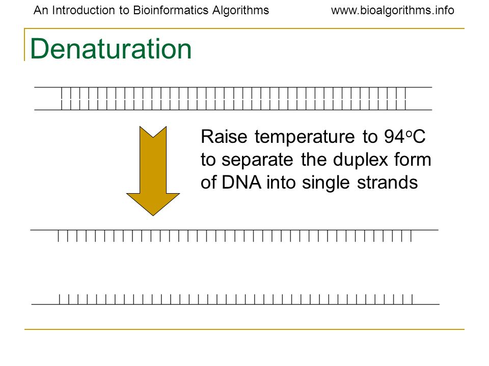 Denaturation Raise temperature to 94oC to separate the duplex form of DNA into single strands