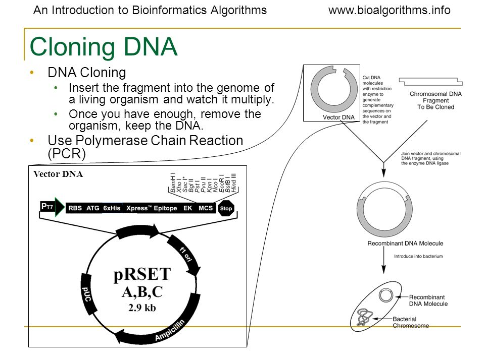 Cloning DNA DNA Cloning Use Polymerase Chain Reaction (PCR)