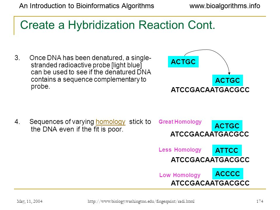 Create a Hybridization Reaction Cont.