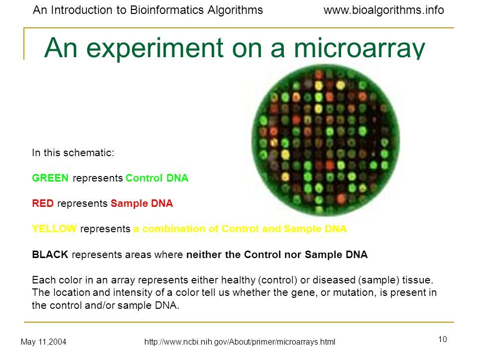 An experiment on a microarray