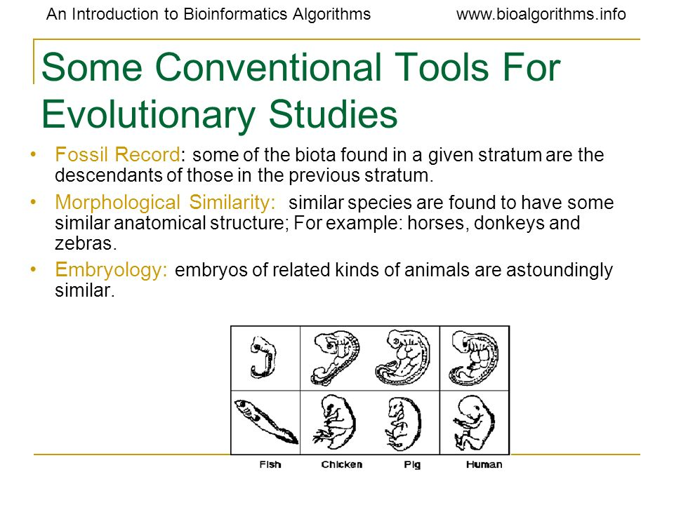 Some Conventional Tools For Evolutionary Studies
