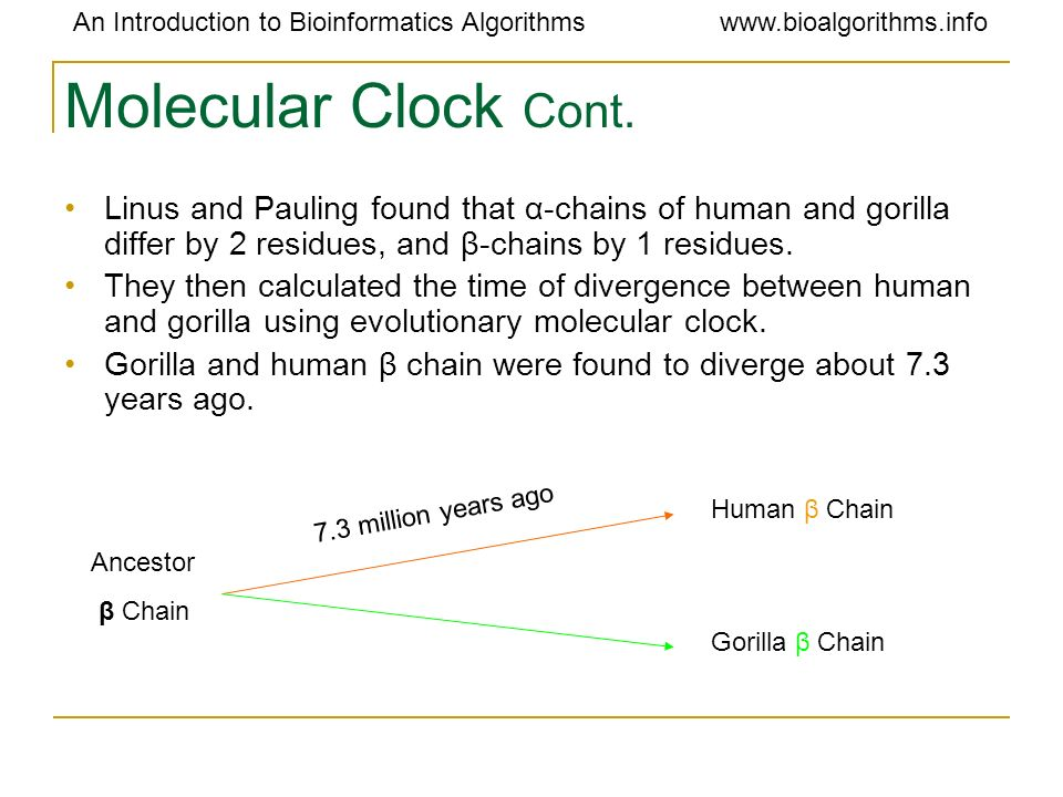 Molecular Clock Cont. Linus and Pauling found that α-chains of human and gorilla differ by 2 residues, and β-chains by 1 residues.