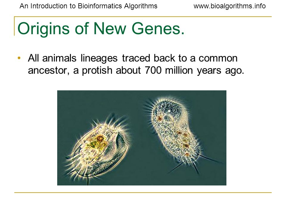 Origins of New Genes.