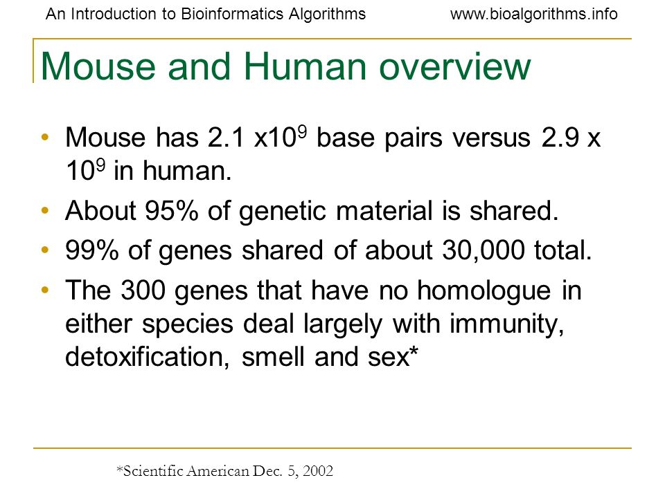 Mouse and Human overview