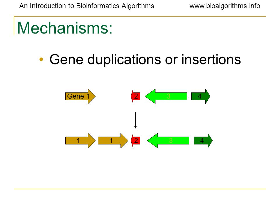 Gene duplications or insertions