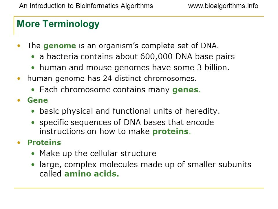 More Terminology a bacteria contains about 600,000 DNA base pairs