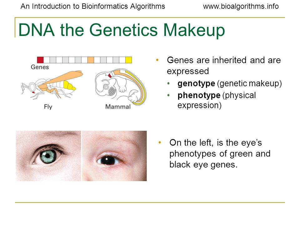 DNA the Genetics Makeup