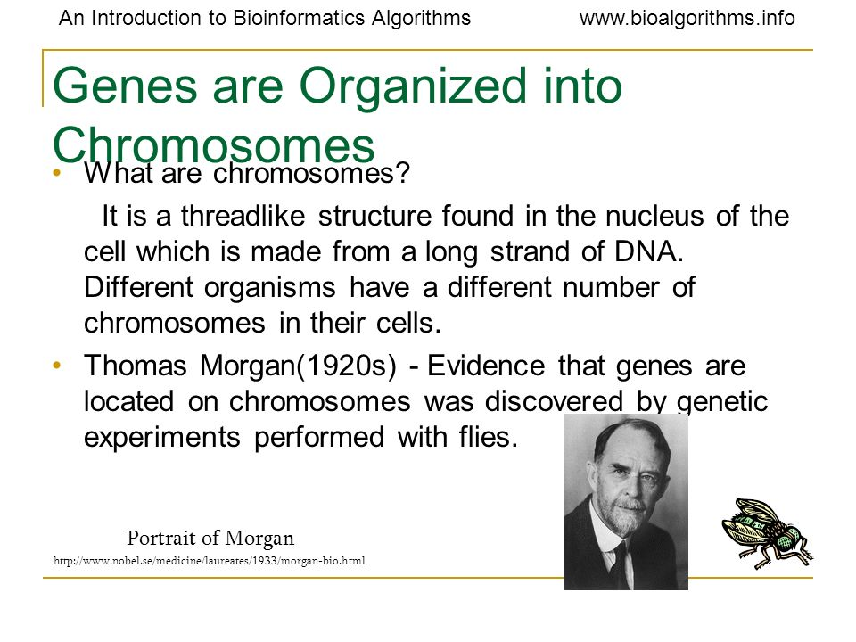 Genes are Organized into Chromosomes