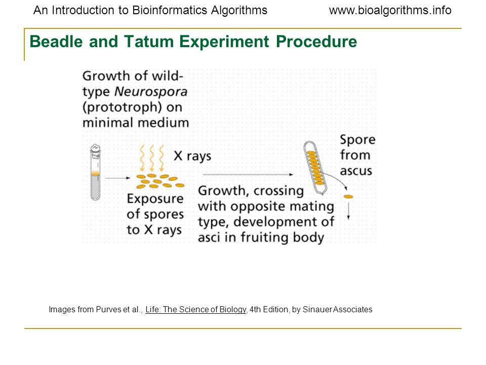 Beadle and Tatum Experiment Procedure