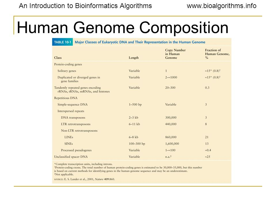 Human Genome Composition