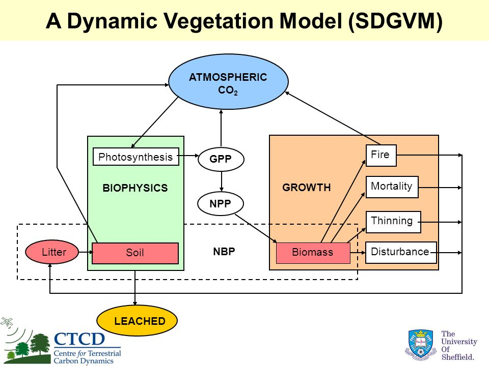 A Dynamic Vegetation Model (SDGVM)