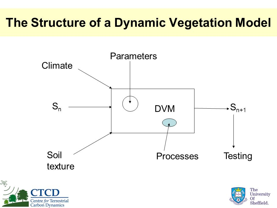 The Structure of a Dynamic Vegetation Model