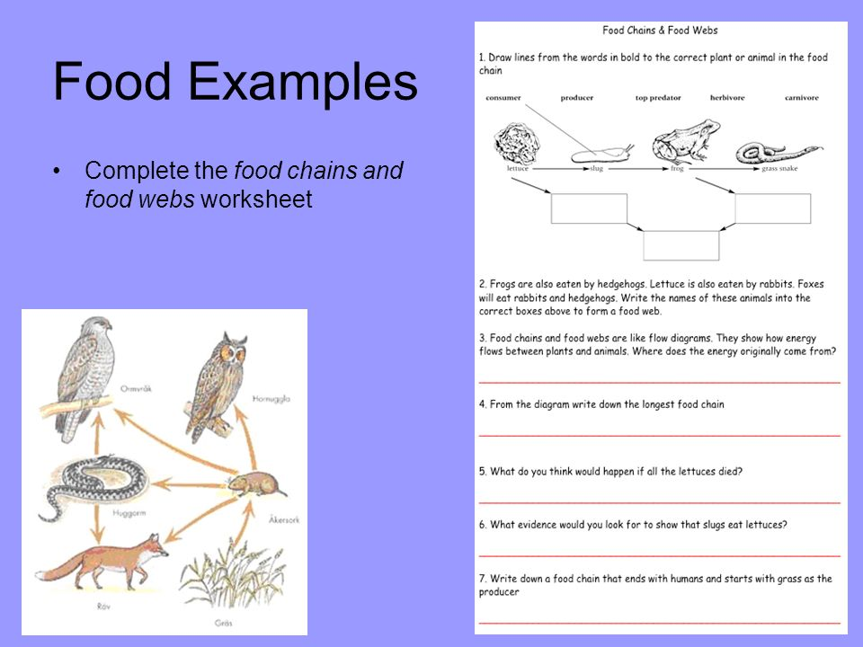 Schedule Worksheet Templates Food Chains  Food Webs D Crowley Ppt Video Online Download Irregular Verb Worksheets with Worksheets On Patterns Excel  Food Examples Complete The Food Chains And Food Webs Worksheet Times Tables Worksheets Ks2 Excel