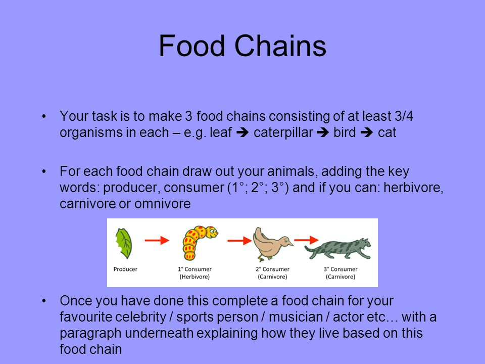 how to start a food chain
