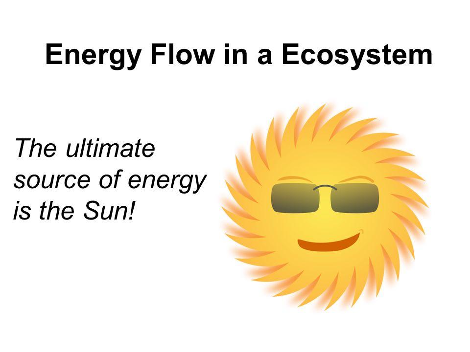 essay on sun is the ultimate source of energy How plants acquire their energy making energy from the ultimate energy source photosynthesis is the process by which plants convert energy from the sun.