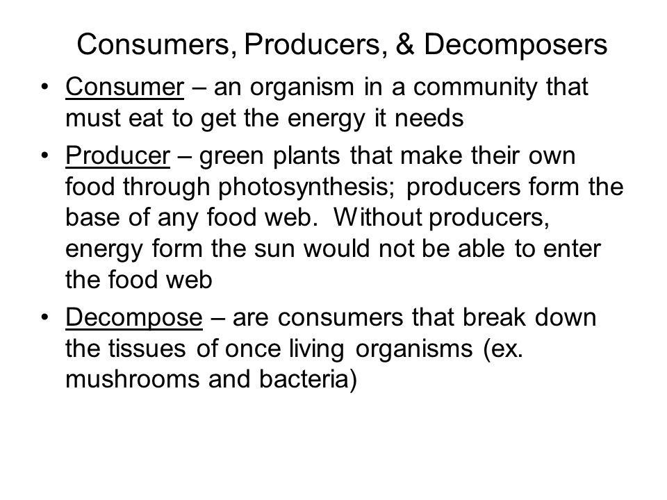 relationship between producers consumers and decomposers in the amazon