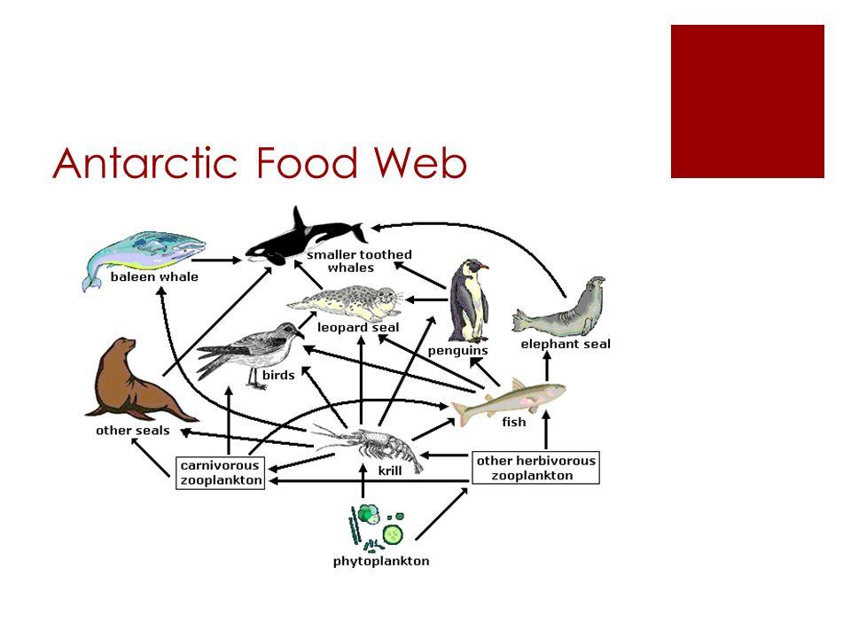 Food webs ppt download for Antarctic cuisine
