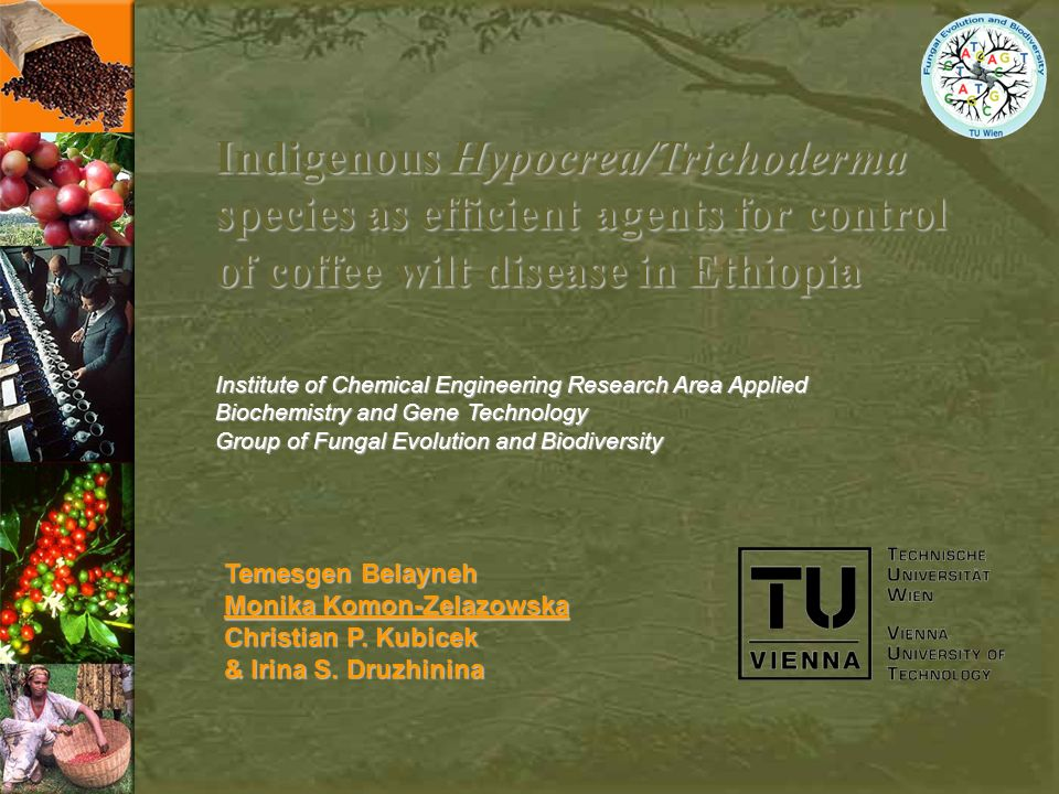 Indigenous Hypocrea/Trichoderma species as efficient agents for control of coffee wilt disease in Ethiopia