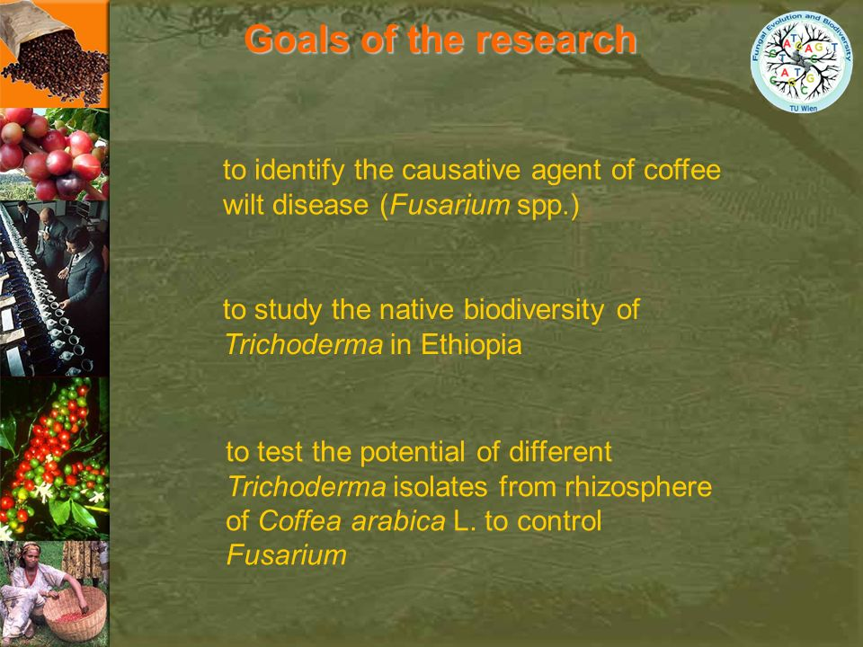 Goals of the research to identify the causative agent of coffee wilt disease (Fusarium spp.)