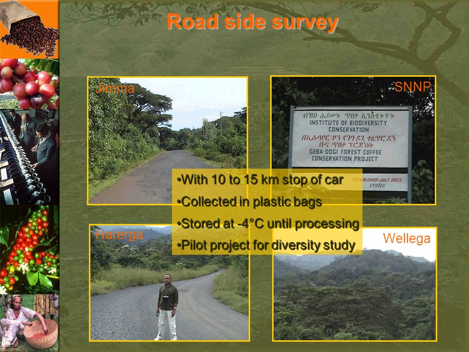 Road side survey SNNP Jimma With 10 to 15 km stop of car
