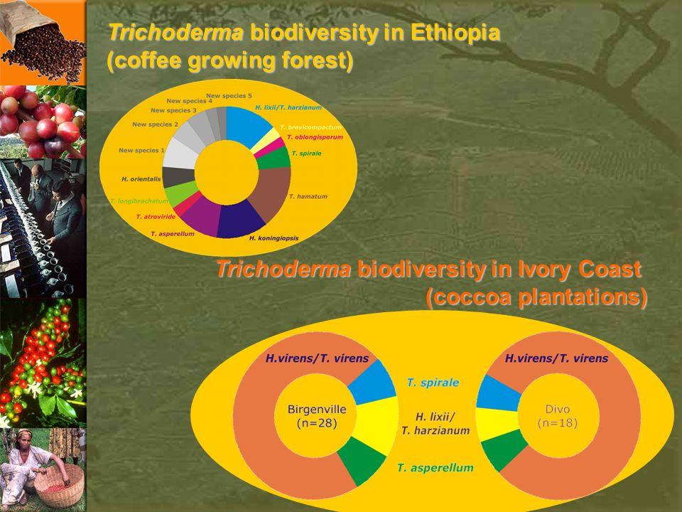 Trichoderma biodiversity in Ethiopia