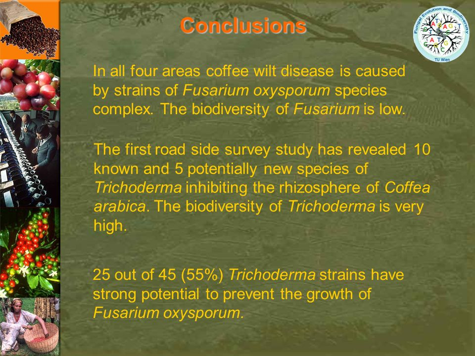 Conclusions In all four areas coffee wilt disease is caused by strains of Fusarium oxysporum species complex. The biodiversity of Fusarium is low.