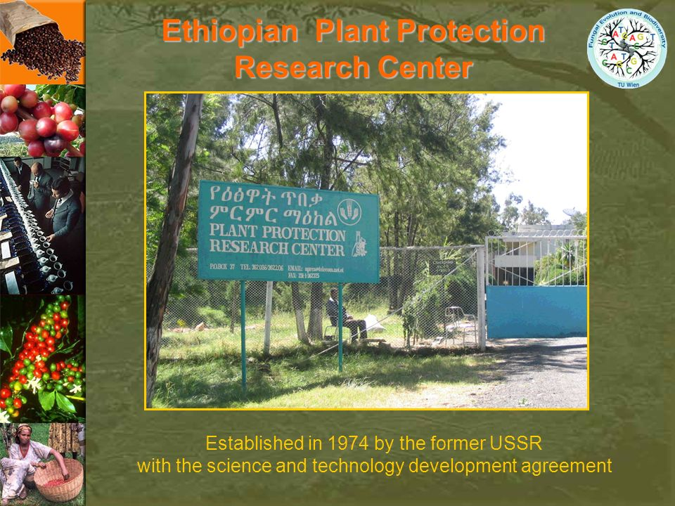 Ethiopian Plant Protection
