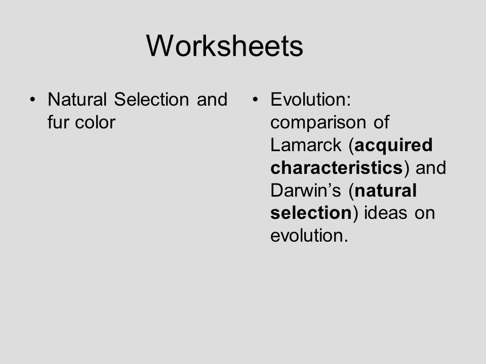 Evolution ppt download – Natural Selection Worksheets