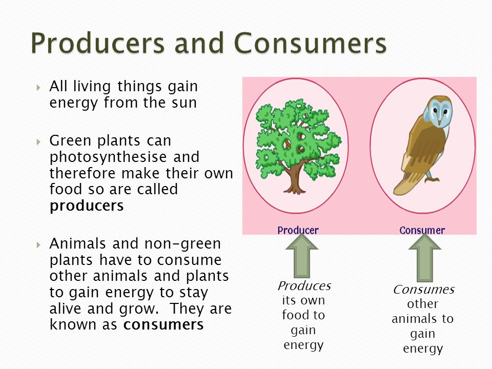 Ecosystems: food chains and food webs - ppt video online ...