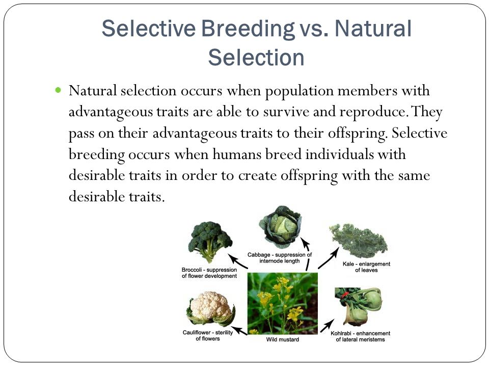 natural selection evolution study guide Natural selection is a process in which organisms  population genetics is the study of evolution from  chapter 15 and 16 study guide answers author:.