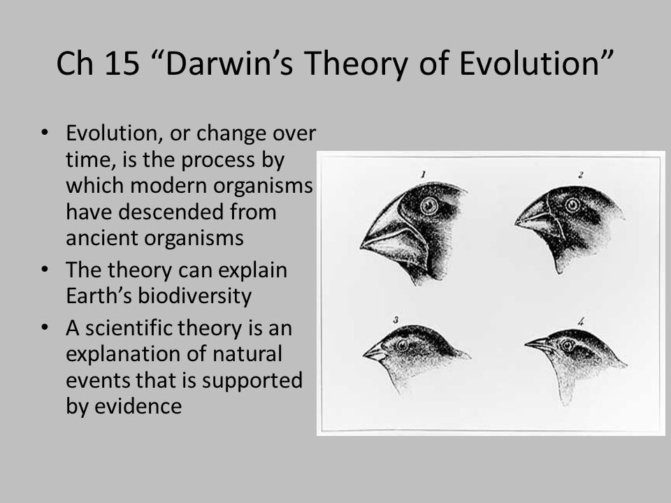 an explanation of darwins theory of evolution The theory of evolution by natural selection doesn't attempt to explain how life first began or why living things are on earth rather, the theory of evolution by natural selection explains the scientifically observable processes that change the physical characteristics of living things through time.
