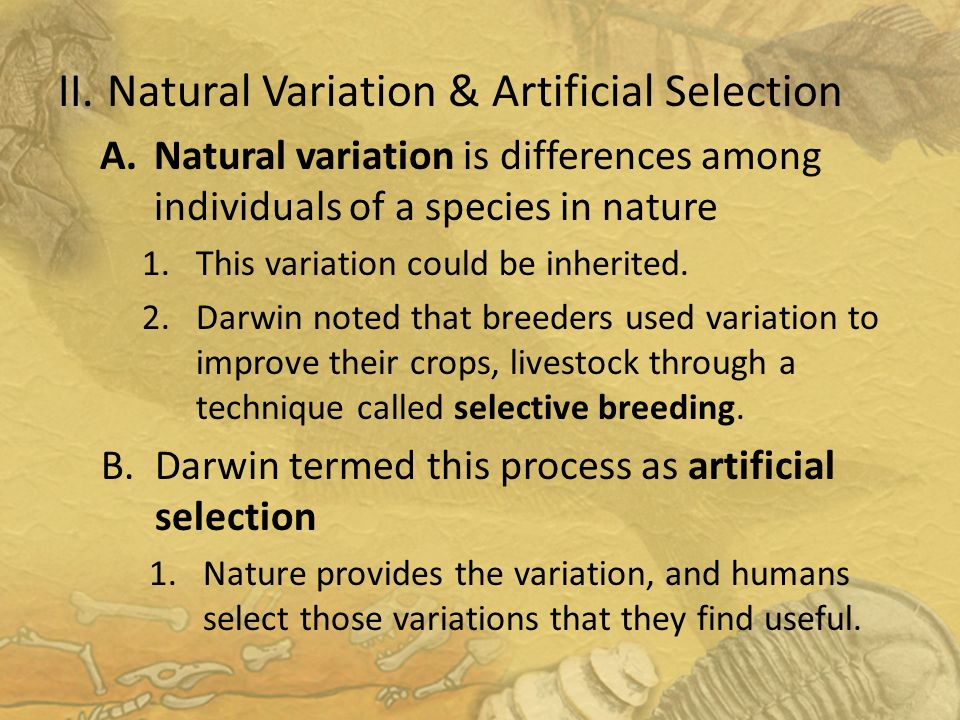 essay on selective breeding Search – selective breeding – this topic also appears in the pop-up subject list scroll down and select the resources you want to view or: click on browse topics and select genetic engineering scroll down and select the resources you want to view go to student resources in context this database is a similar format to.